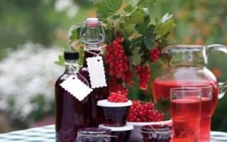 Ликёр из красной смородины в домашних условиях простой рецепт